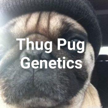 ThugPug Genetics