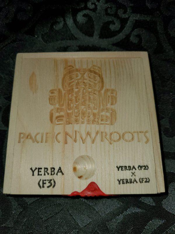 yerba f3