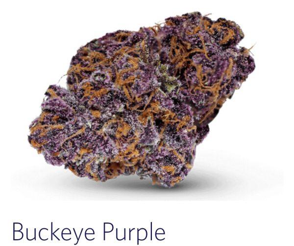 buckeye purple