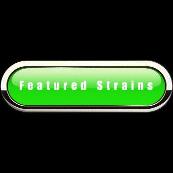 FEATURED STRAINS