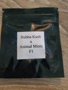 bubba kush x animal mints (cash only auction)