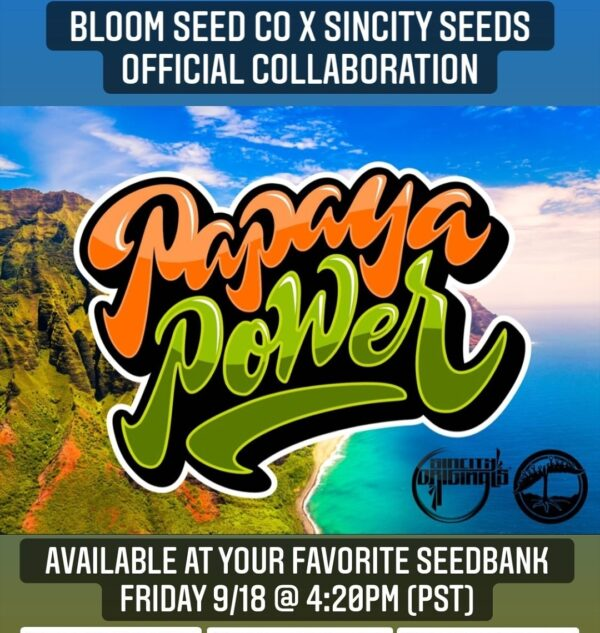 papaya power strain