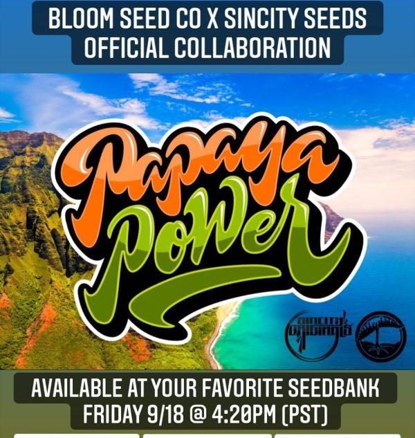 papaya power strain