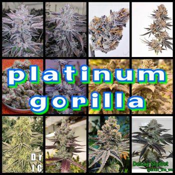 Platinum Gorilla