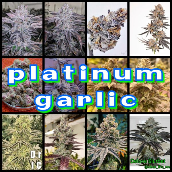 Platinum Garlic