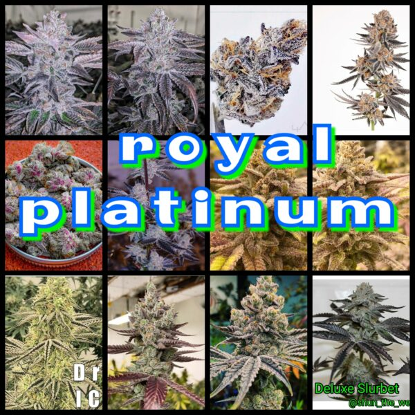 Royal Platinum