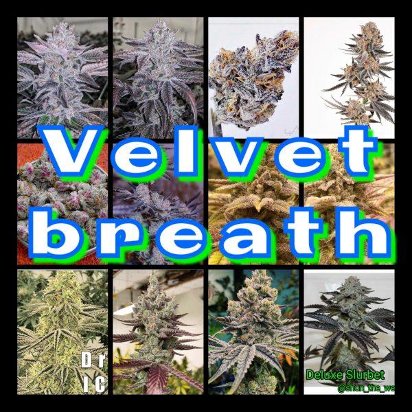 Velvet Breath