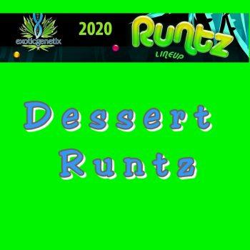 dessert runtz strain