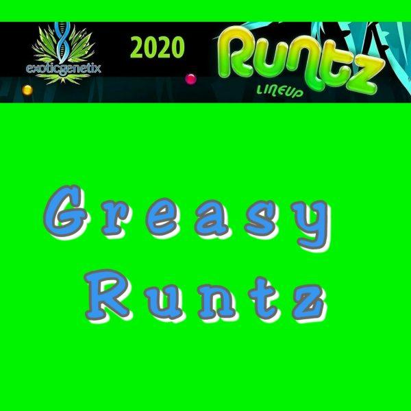 Greasy Runtz Strain