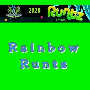 Rainbow Runtz Strain