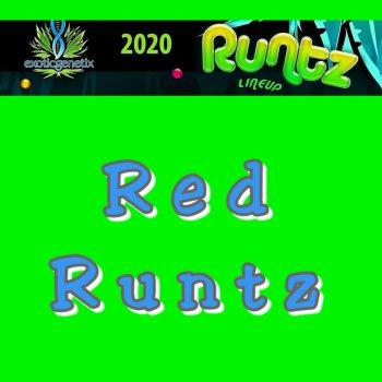 Red Runtz Strain