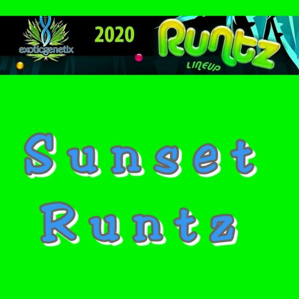 Sunset Runtz
