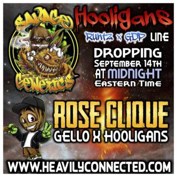 rose clique strain