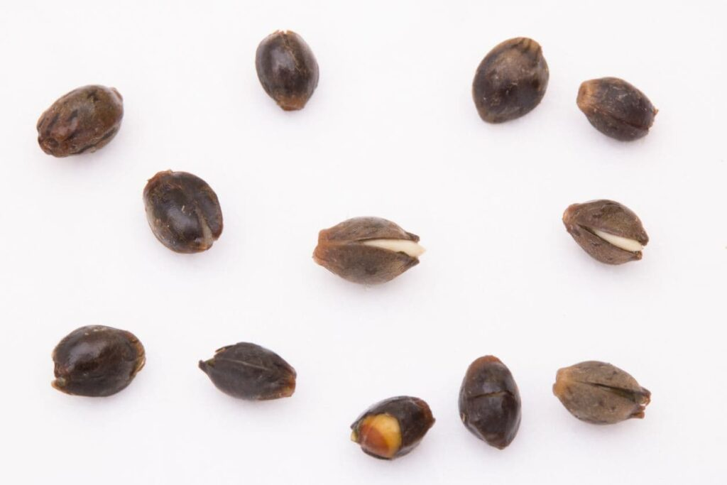 Tricks to germinating older seeds
