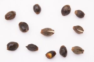 Tricks to germinating older seeds