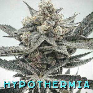 Hypothermia Strain