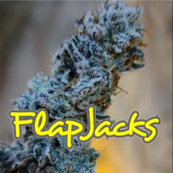 FlapJacks Strain Inhouse Genetics