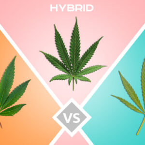 Difference Between Hybrid, Indica & Sativa Seeds