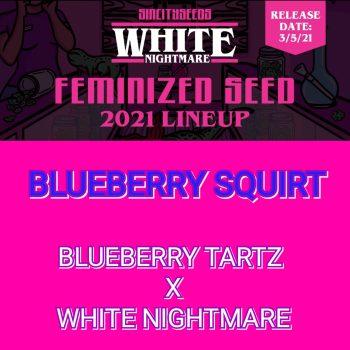 Blueberry Squirt Strain