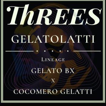 Threes Gelatolatti Strain Three Genetics Reserve