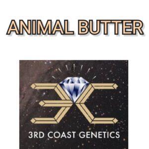 ANIMAL BUTTER - 3RD COAST GENETICS