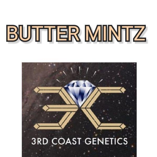 BUTTER MINTZ - 3RD COAST GENETICS