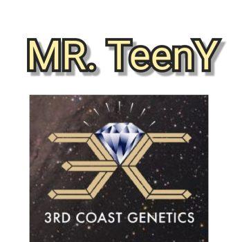 MR TEENY - 3RD COAST GENETICS