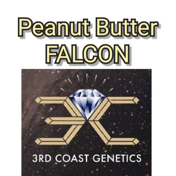 PEANUTBUTTER FALCON - 3RD COAST GENETICS