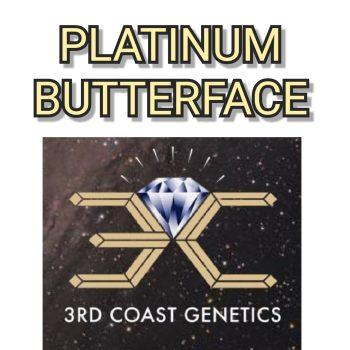 PLATINUM BUTTERFACE - 3RD COAST GENETICS
