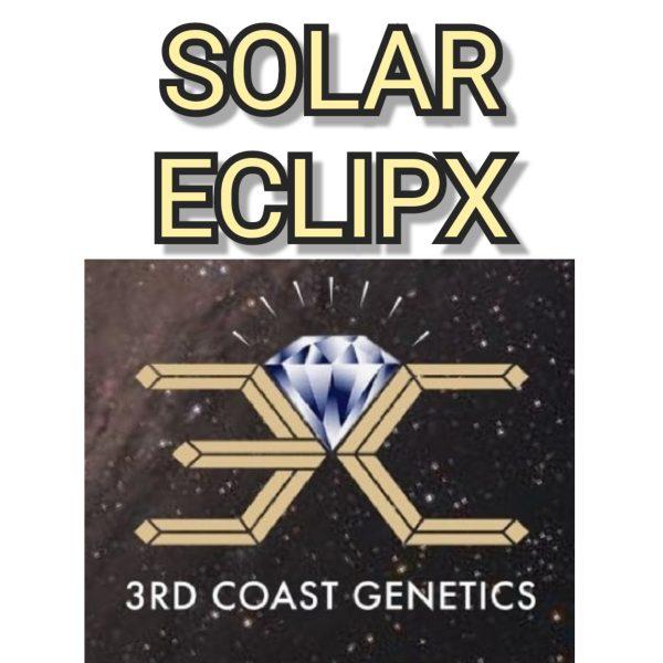 SOLAR ECLIPX - 3RD COAST GENETICS