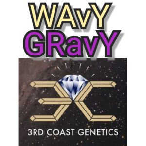 WAVY GRAVY - 3RD COAST GENETICS