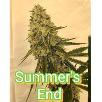SUMMER'S END- LYMERISING FARMS