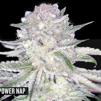 Power Nap s FEMS