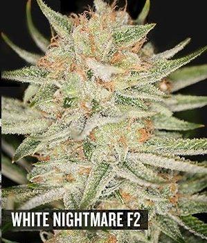 White Nightmare F2