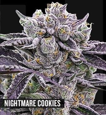 Nightmare Cookies REGS