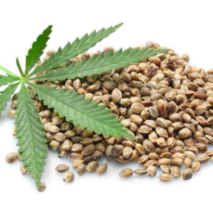 Common Reasons Why Your Seeds Never Germinated